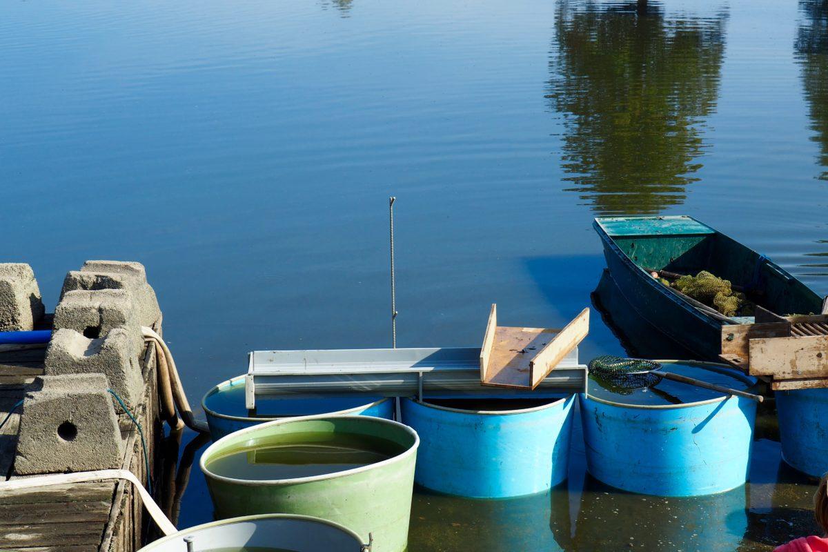 Abfischen und selber fischen.