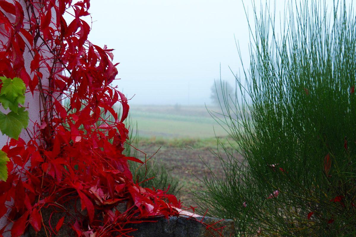Nebel im Westen, Nebel im Norden.