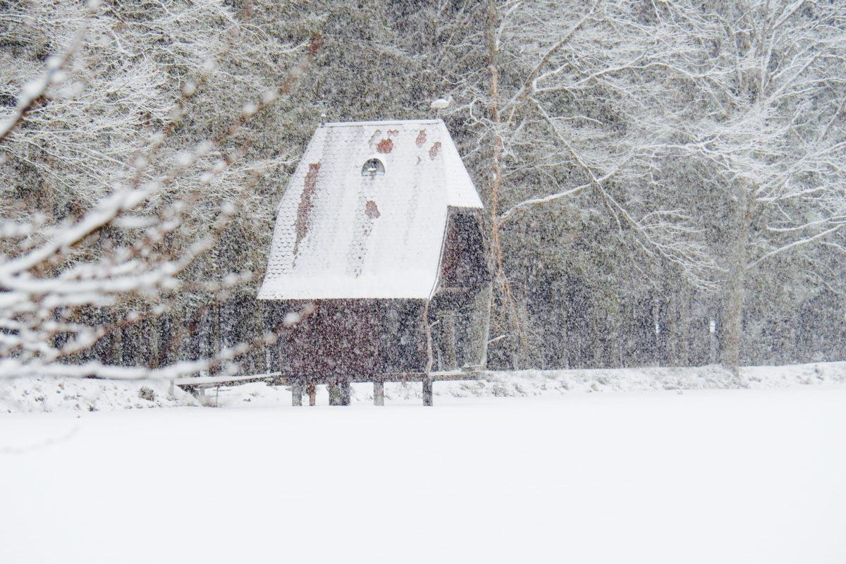 Winterwald und Winterteich