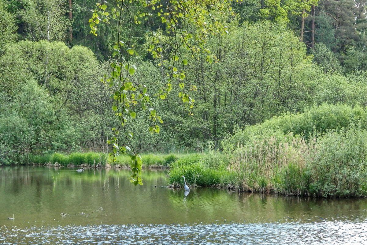 Fliegenfischertag, Forellen und Hanfkirtag