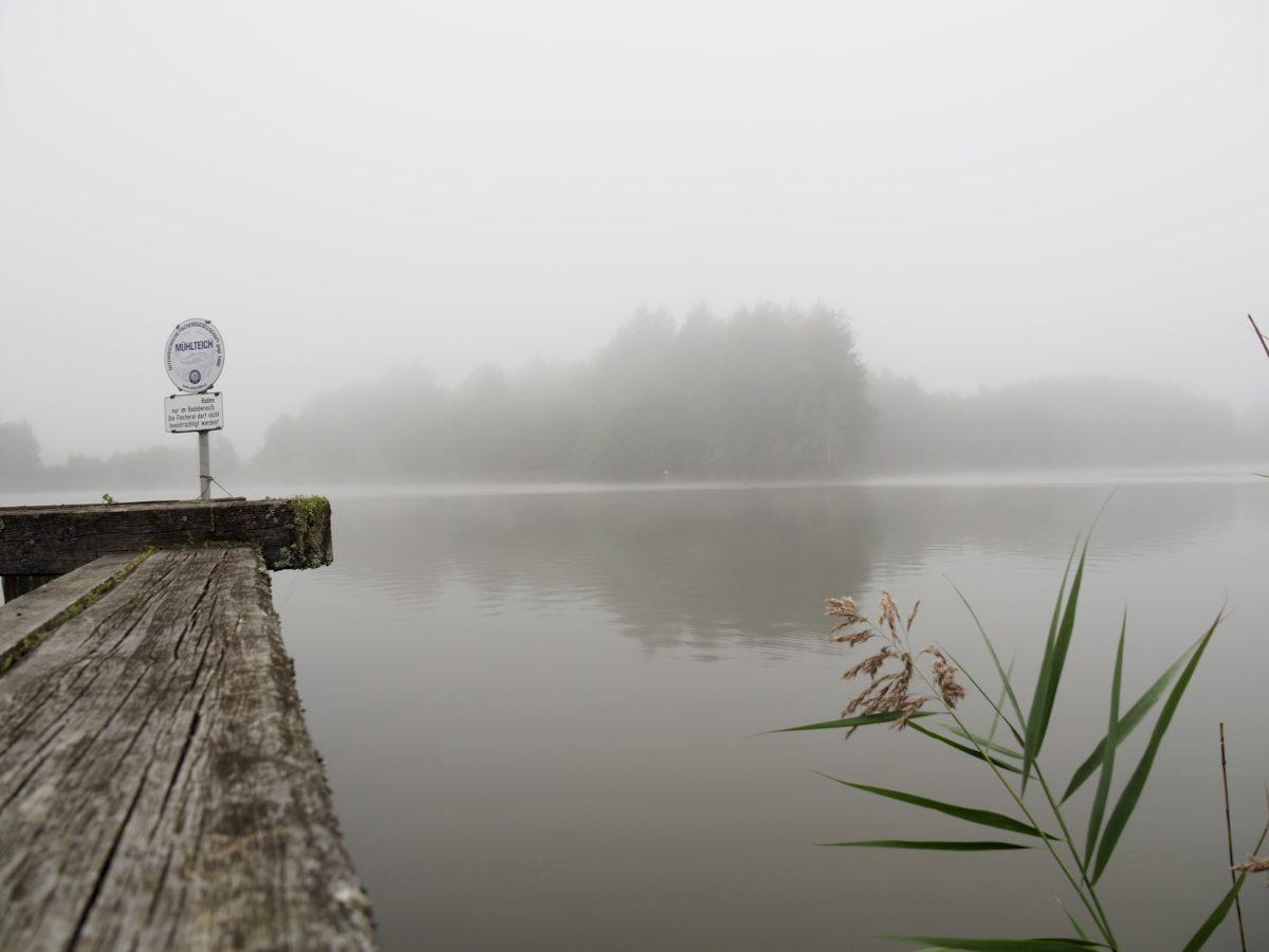 Waldkürbisse, Nebel im September und ein Einserschlag.