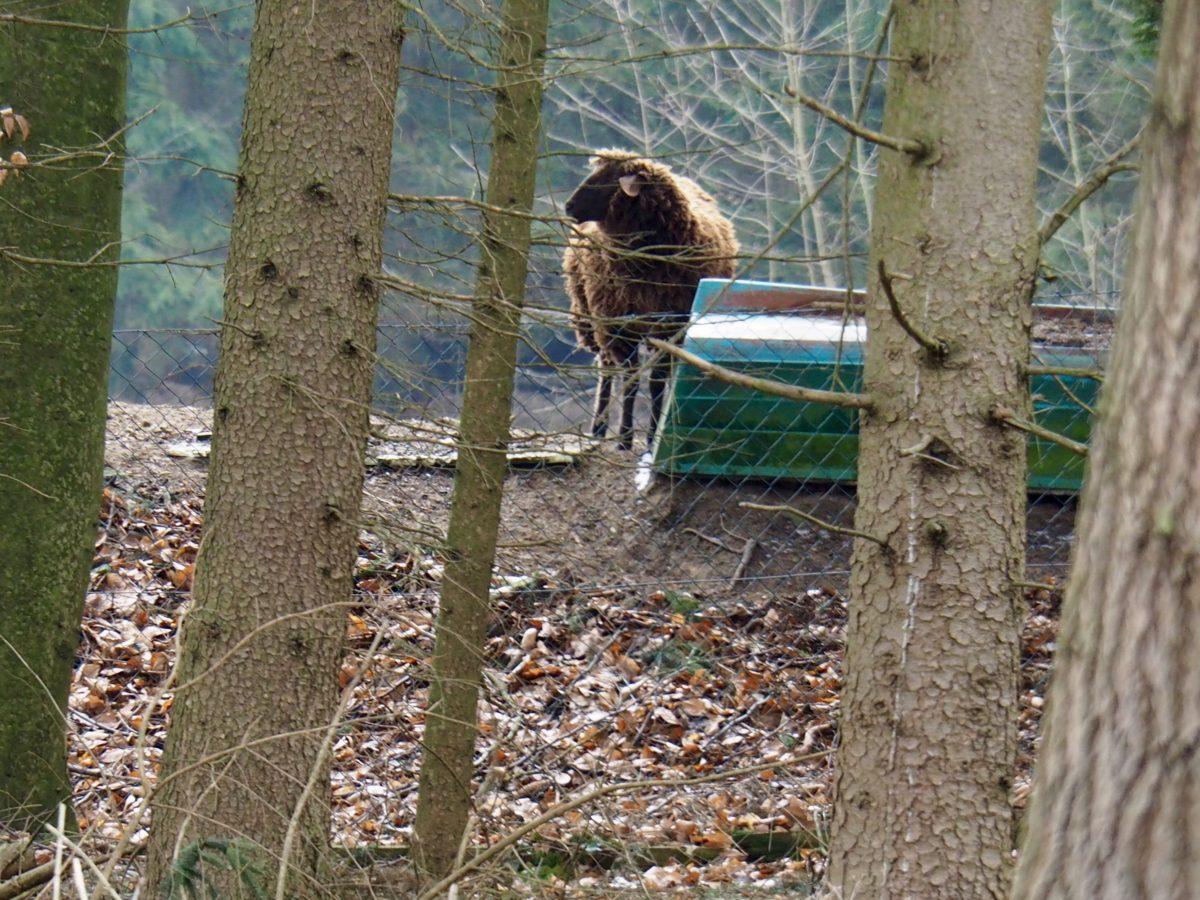 Schaf mit Boot, Eis am See und Palmweihe