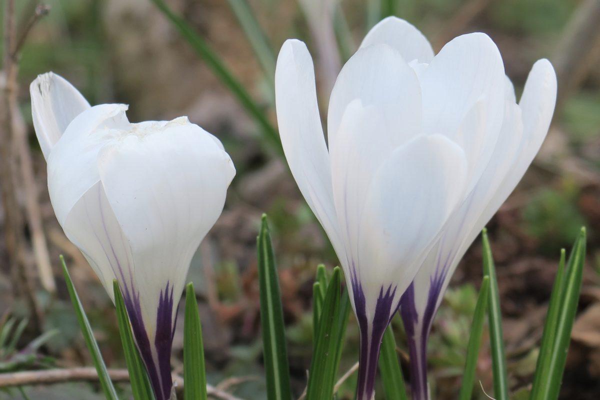 Sonnenuntergänge, Frühlingsblumen und beim Streicher