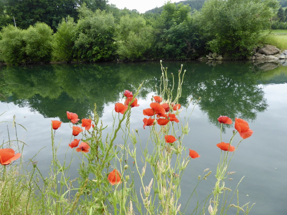 Abkühlung am Fluss, Fest im Prater und Ritt zur Mostalm.