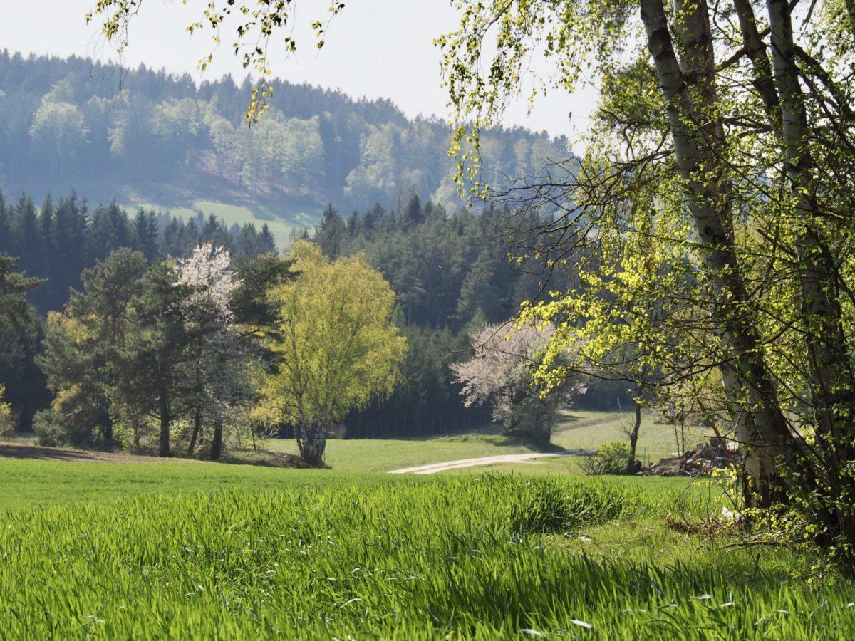 Gartenzeit, Raabs und Kollmitzgraben – Coronawoche 6