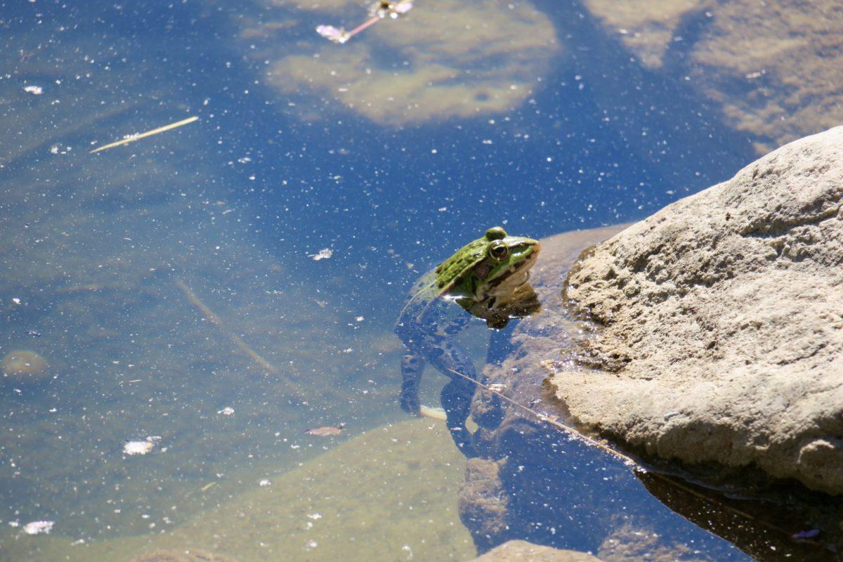 Frösche im Teich, Forellen im Fluss, Menschen im Container
