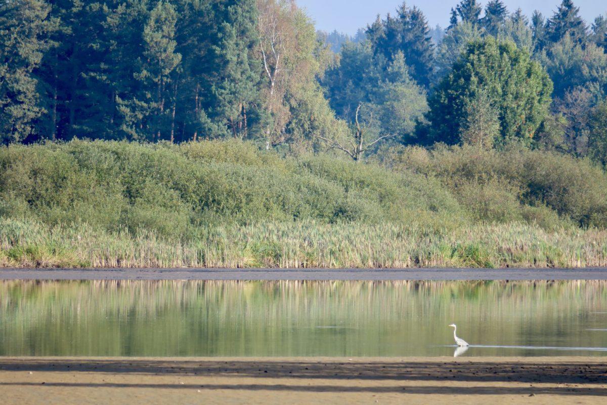 Wienspaziergänge, Seeadler am Teich und Wahl in der Hauptstadt
