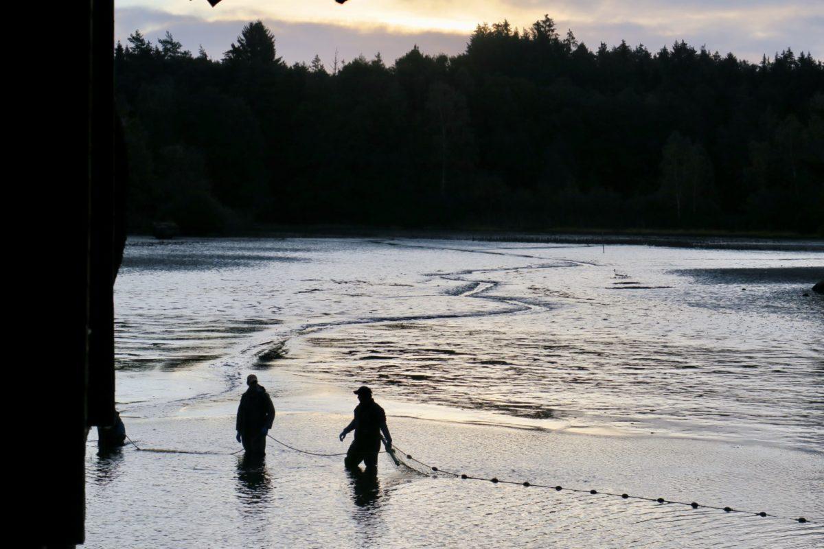 Ente am Abend, Fische am Morgen und Sonne am Sonntag