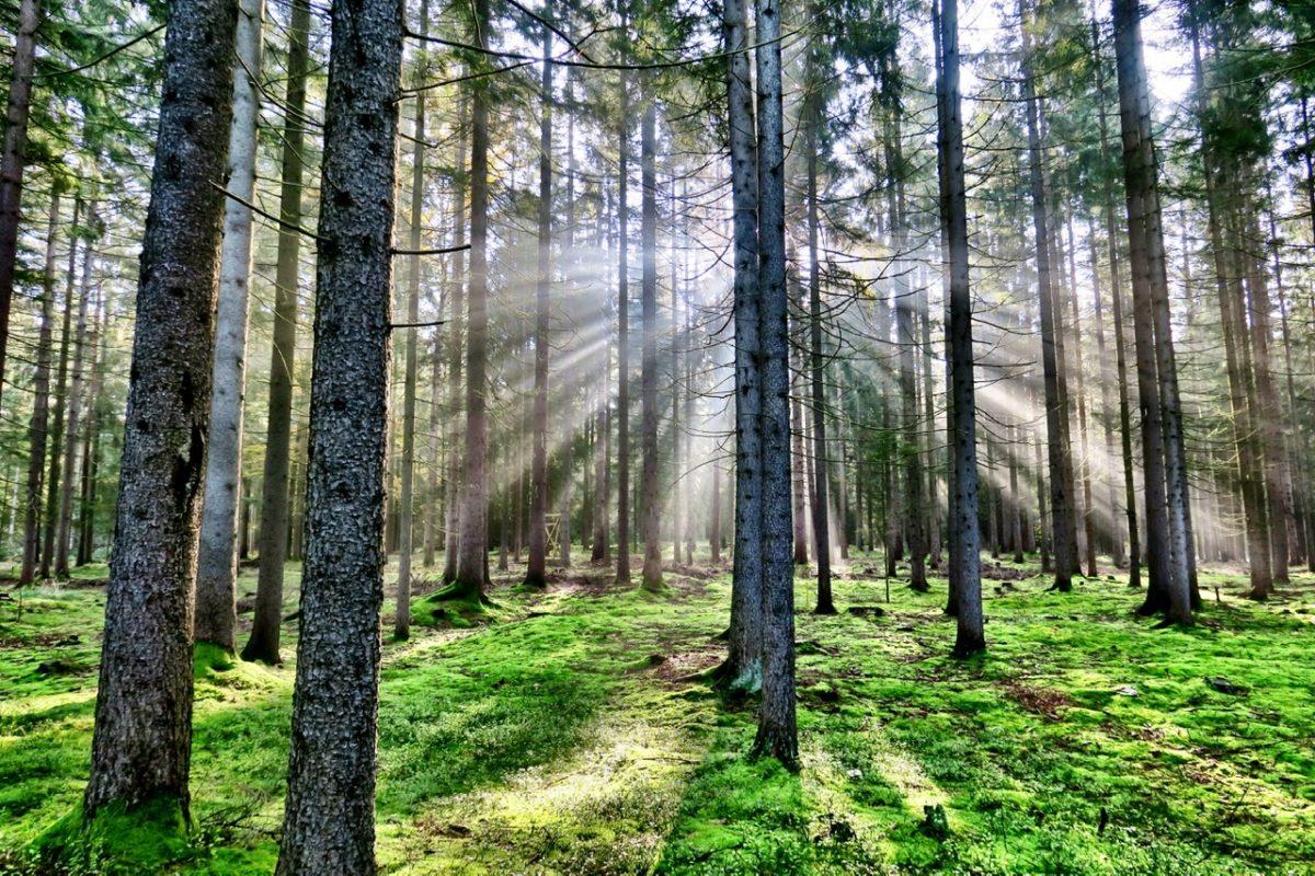 Bären, Herbstküche und ein Indian Summer in Litschau