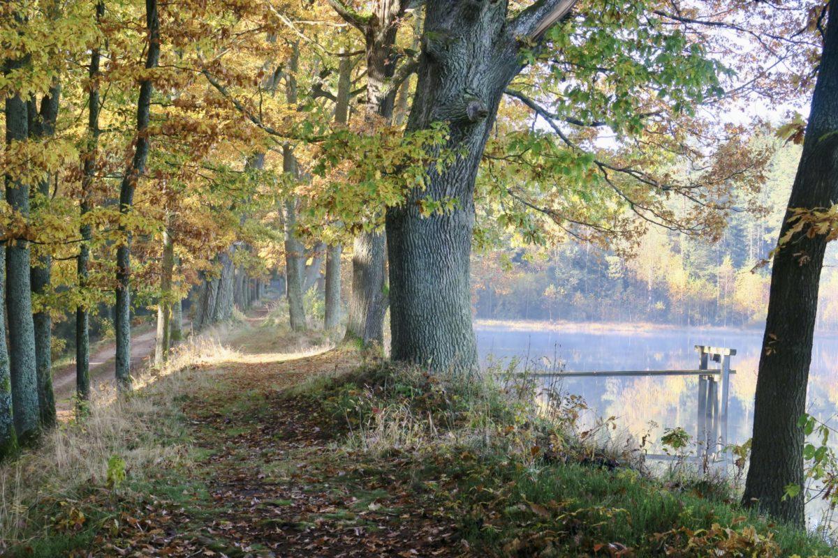 Urlaub in Litschau, Gansl und im Herbstwald.