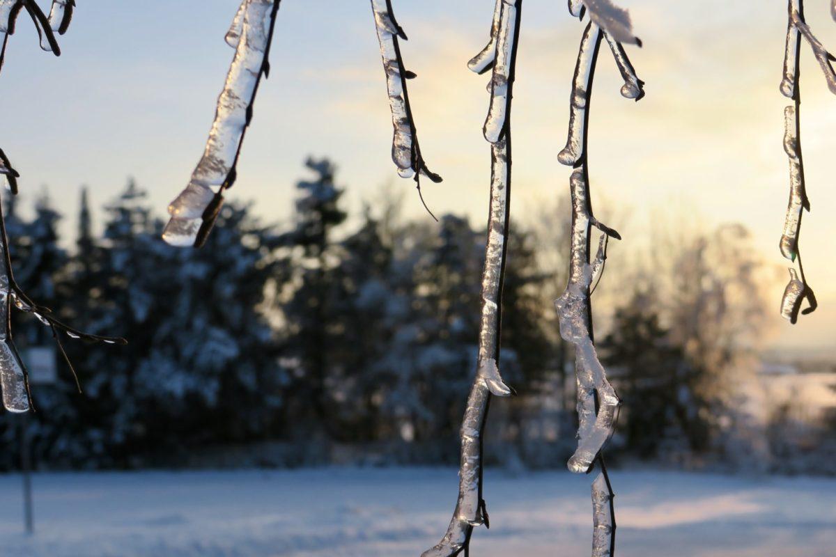 Arktische Kälte, Wintertraum und ein Fasching ohne Spaß